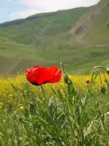 Nature of Armenia close to Spitak