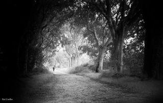Rui Coelho, photographer, alley of trees