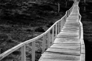 Rui Coelho, Bridge of hope